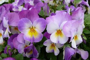 outdoor-blossom-plant-field-flower-petal