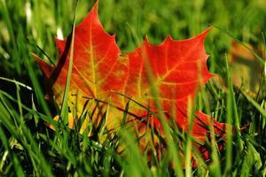 tree-nature-grass-light-plant-lawn