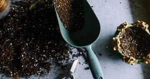 Plant - soil -gardening