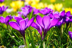 Blossom-summer-flower-purple