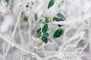 tree-water-nature-branch-snow-winter