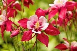 nature-blossom-plant-flower-petal-bloom