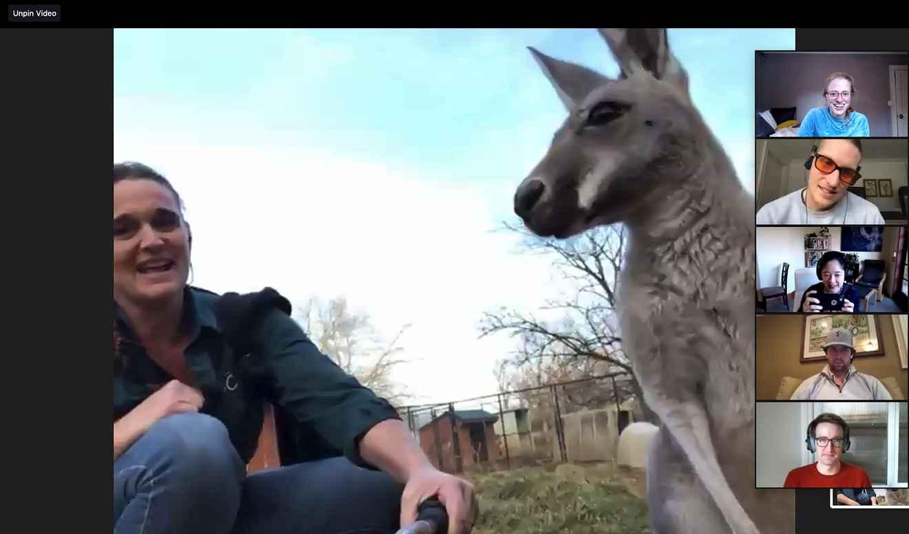 A kangaroo on a zoom!