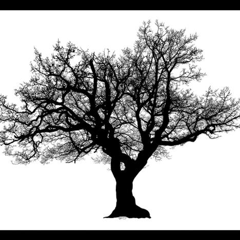 Heidi Piercy, Old Tree At Llandrindod Wells Lake, 2020