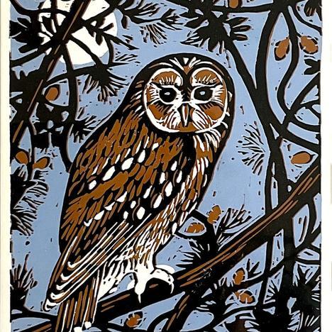 Diane Rose , Owl in Pine Tree , null