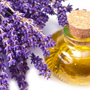 Lavender – USDA Certified Organic