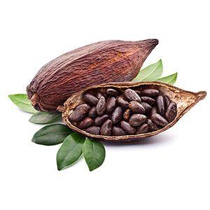 Organic Theobroma Cocoa Butter