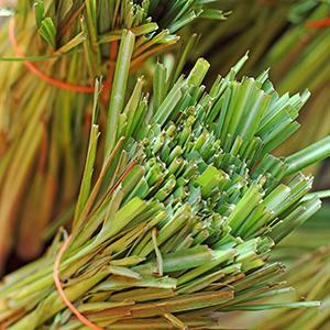 Lemongrass – USDA Certified Organic