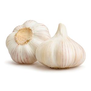 Garlic bulb extract powder