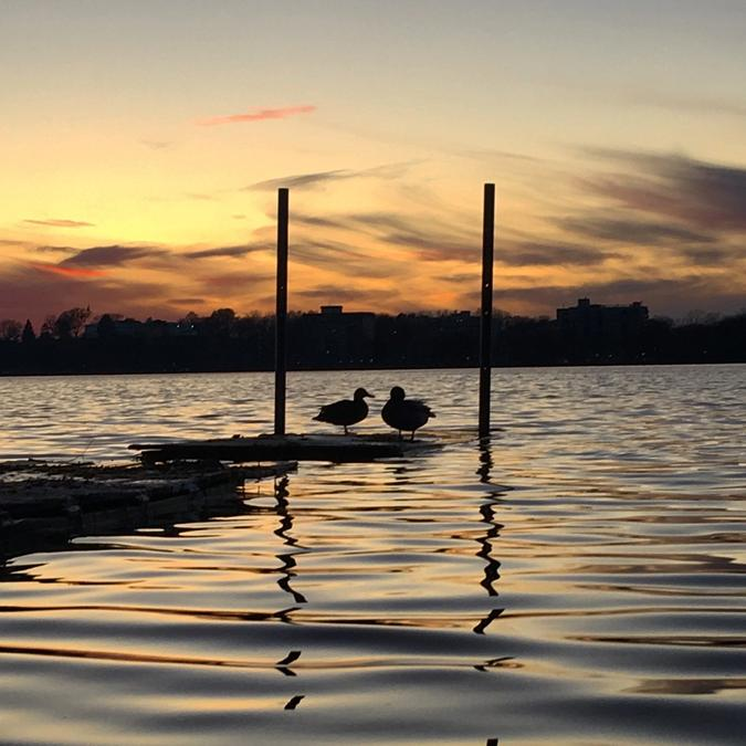 two ducks on the water with the sun setting
