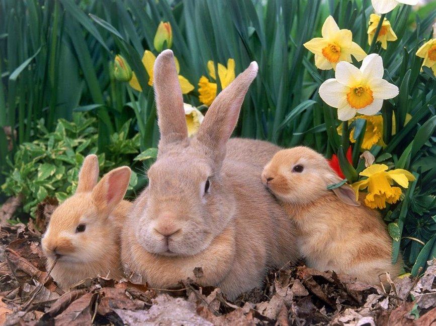 Borítókép Áldott Húsvétot Kívánok Nektek!