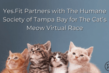 Yes.Fit Partners with The Humane Society of Tampa Bay for The Cat's Meow Virtual Race card image