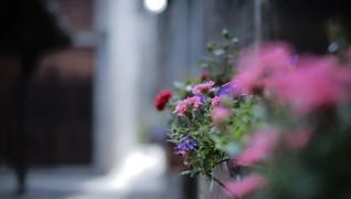Blomster fra Selvåg gartneri
