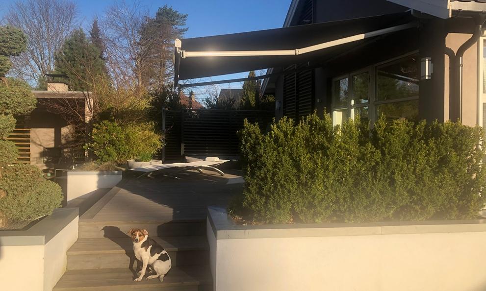 hund foran en terrasse