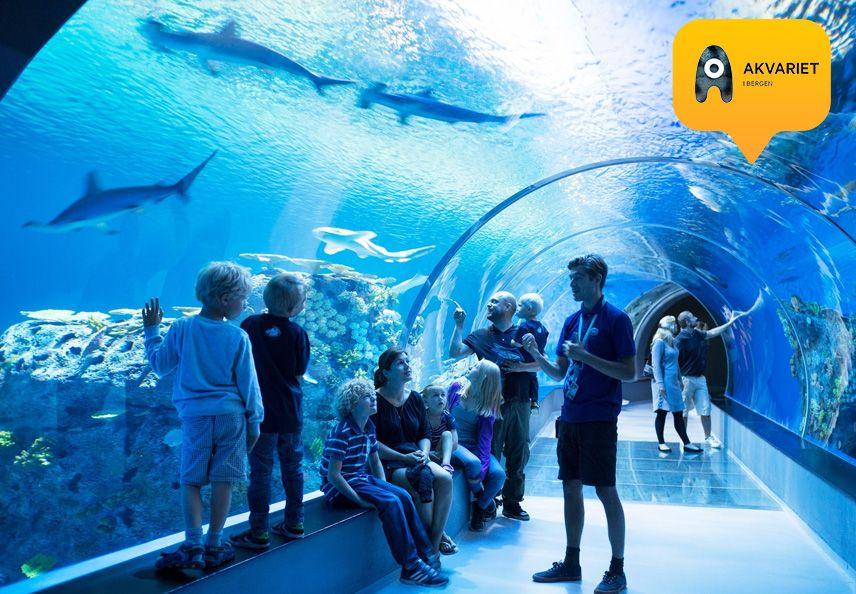 Havtunnel i Akvariet i Bergen