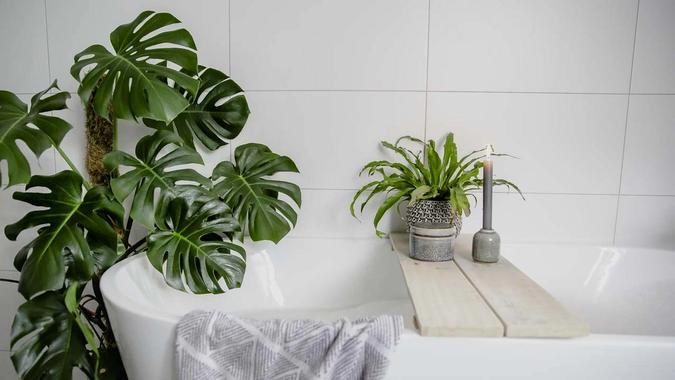 grønne planter på baderom