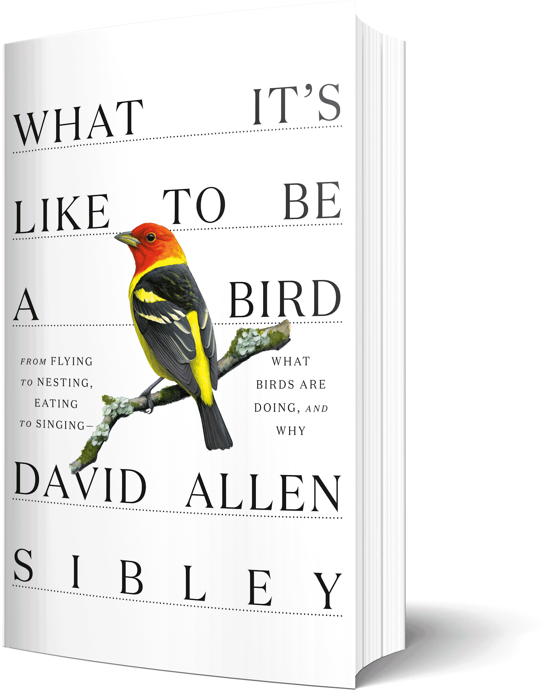 Book Recommendation: What It's Like to be a Bird