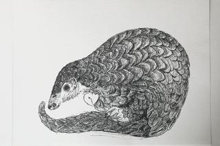 Pangolin tekening, inkt op papier