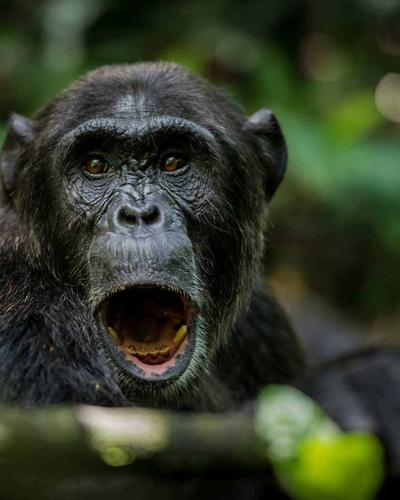 Seven-Day Gorillas and Chimps Fly and Drive