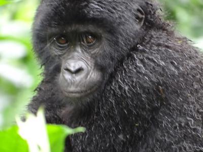 Five-Day Double Gorilla Trekking via Entebbe
