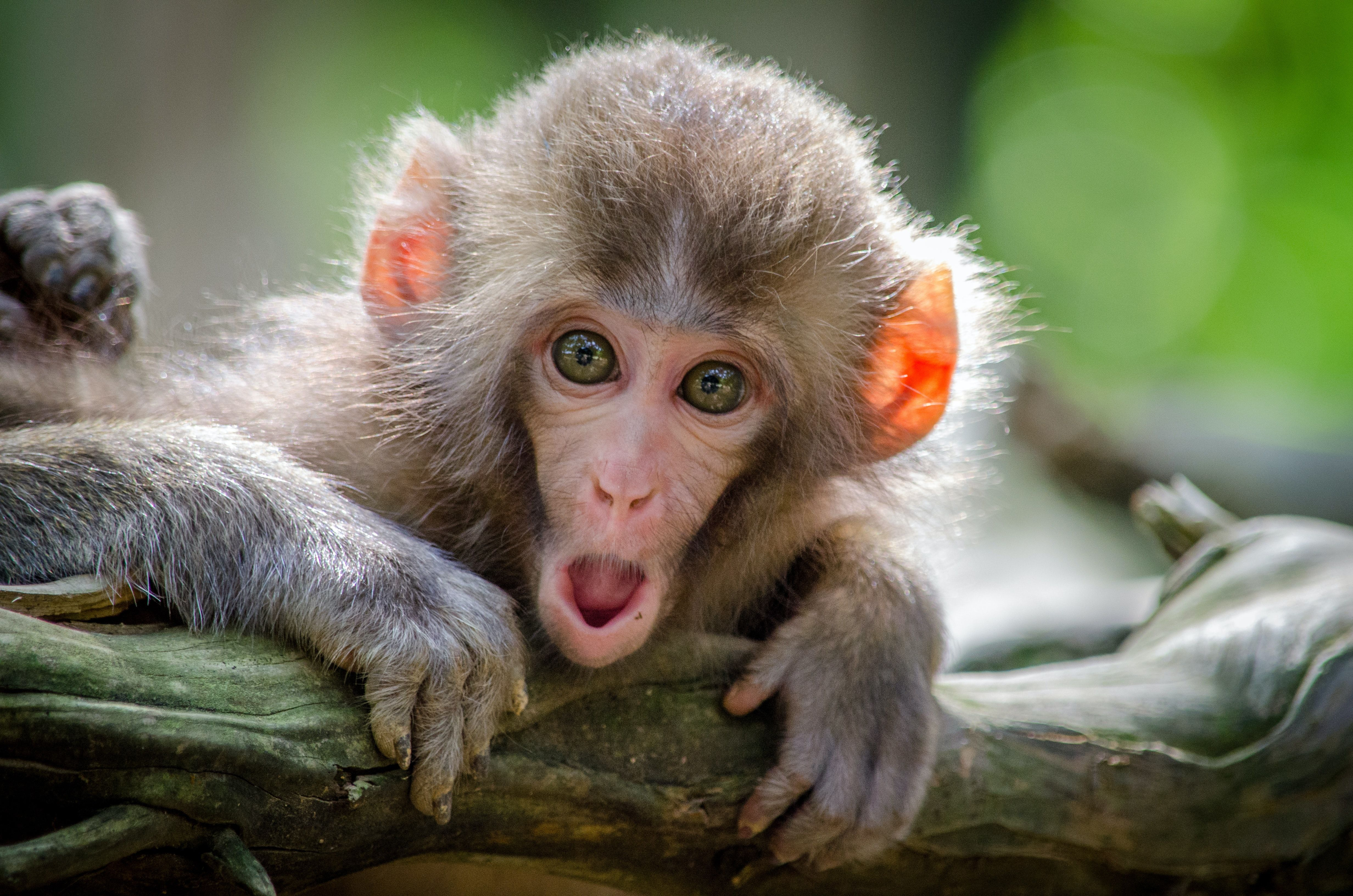 Excited monkey
