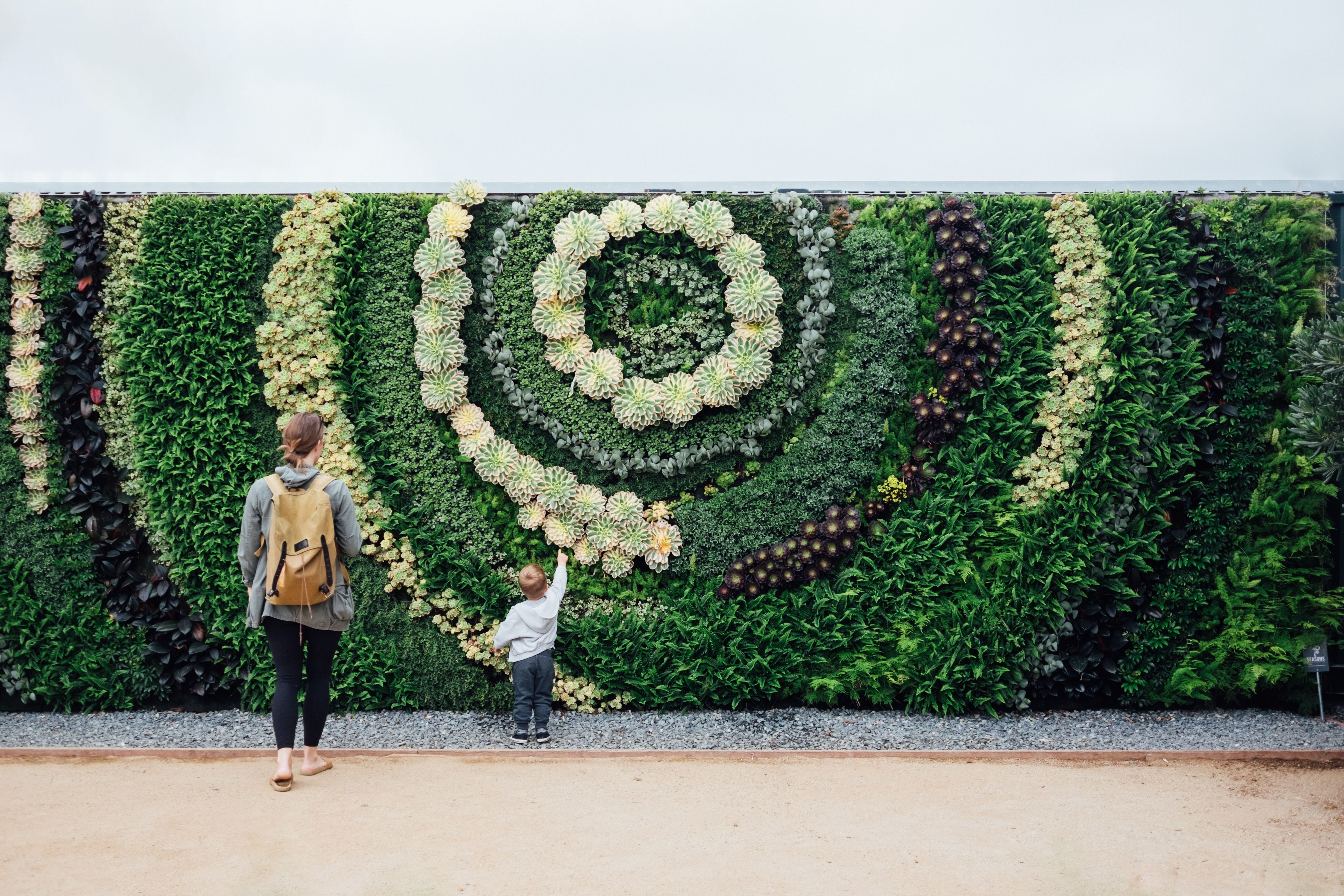 living walls plants sustainable
