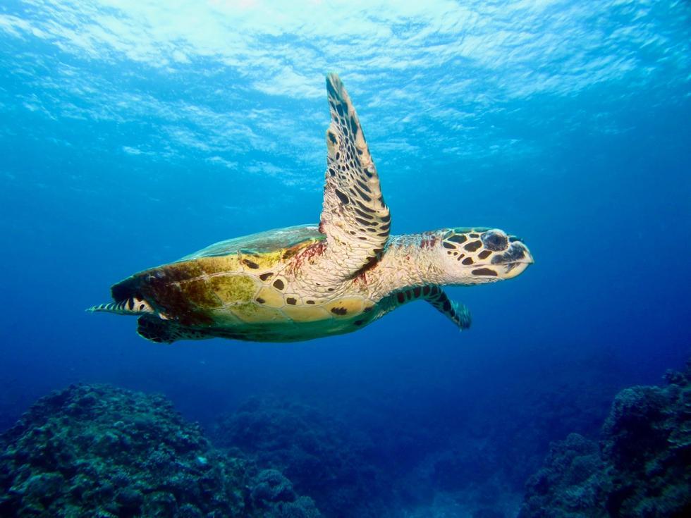 Sea turtle swimming with a positive attitude