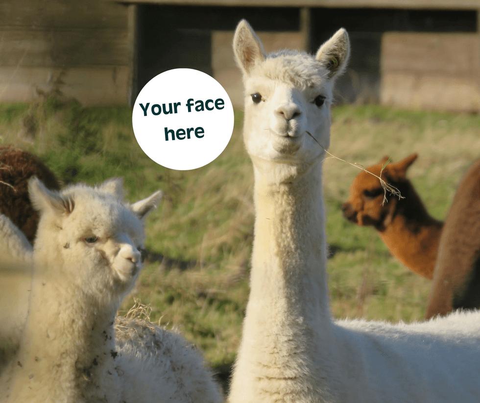 Your new alpaca friend?