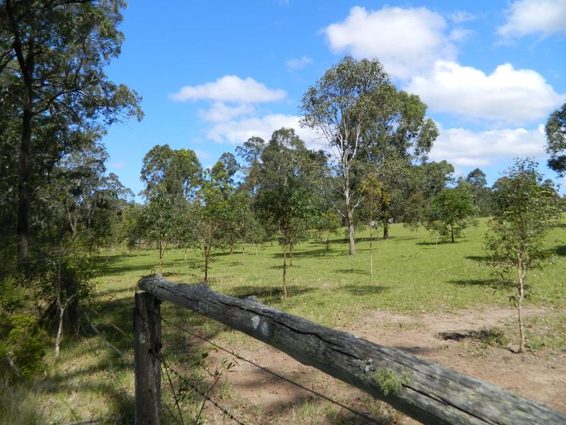 Tree Farming Koala Food Trees