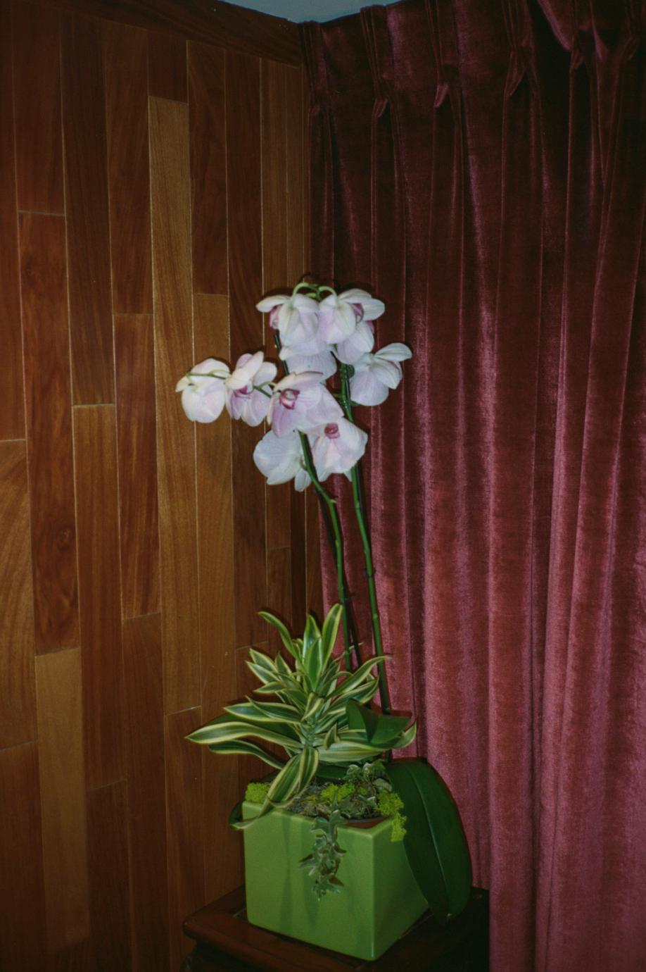 LATW - Plasticine Orchid