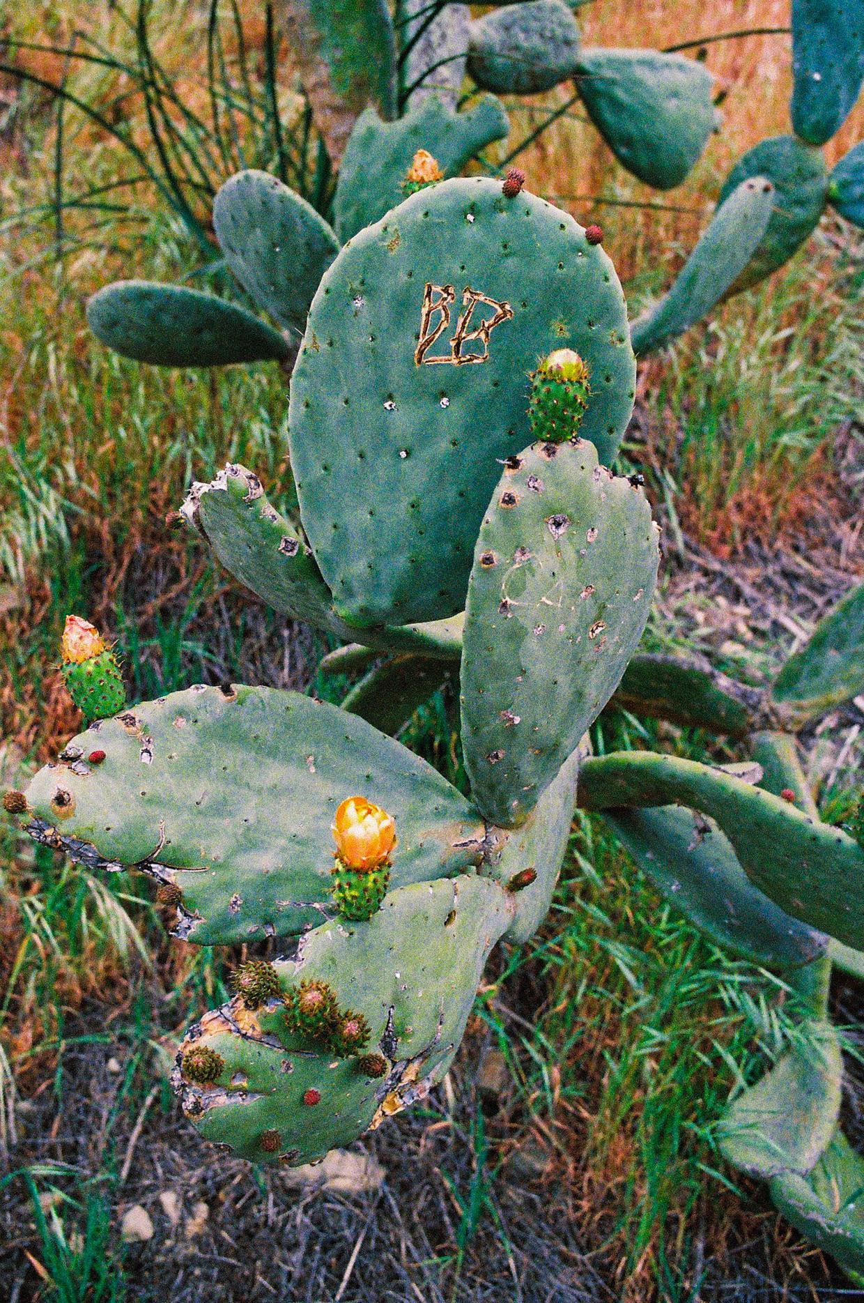 LATW - Cactus 2B