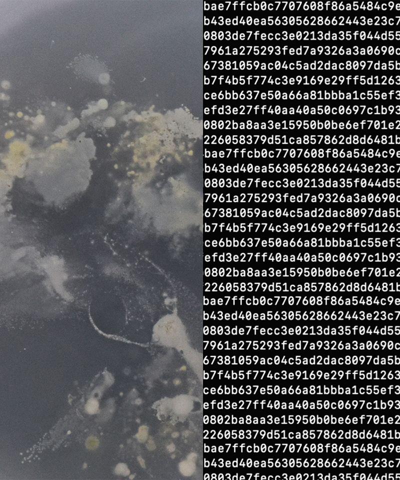 Data and AI