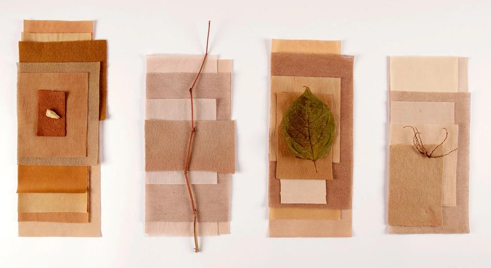 Marina Belintani's Japanese Knotweed Project