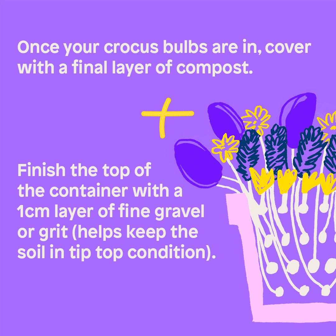 Once your crocus bulbs are in, cover with a final layer of compost.  + Finish the top of the container with a 1cm layer of fine gravelor grit (helps keep the soil in tip top condition).