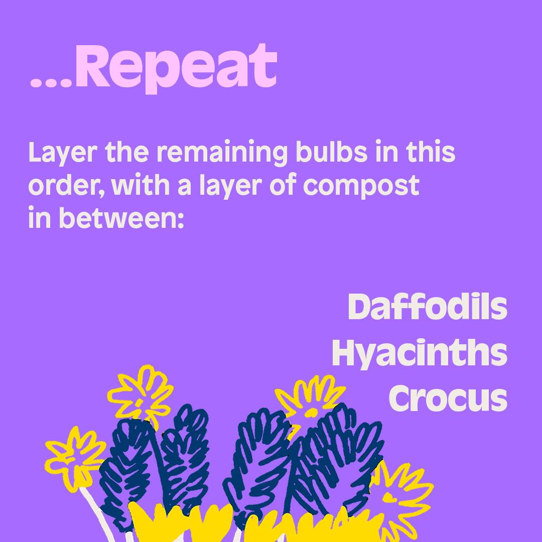...Repeat. Layer the remaining bulbs in this order, with a layer of compost in between: Daffodils Hyacinths Crocus