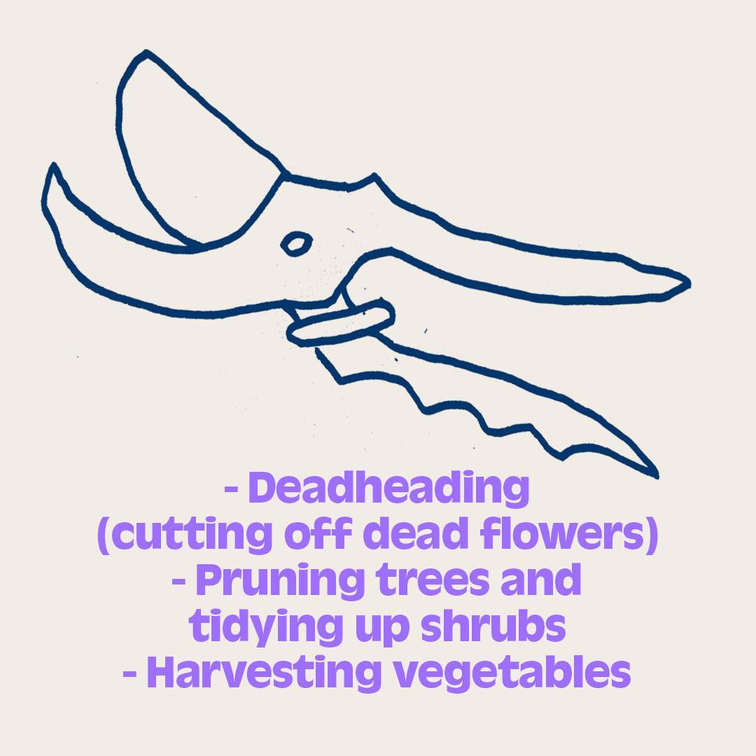 - Deadheading  (cutting off dead flowers) - Pruning trees and  tidying up shrubs - Harvesting vegetables  - Snipping cut flowers