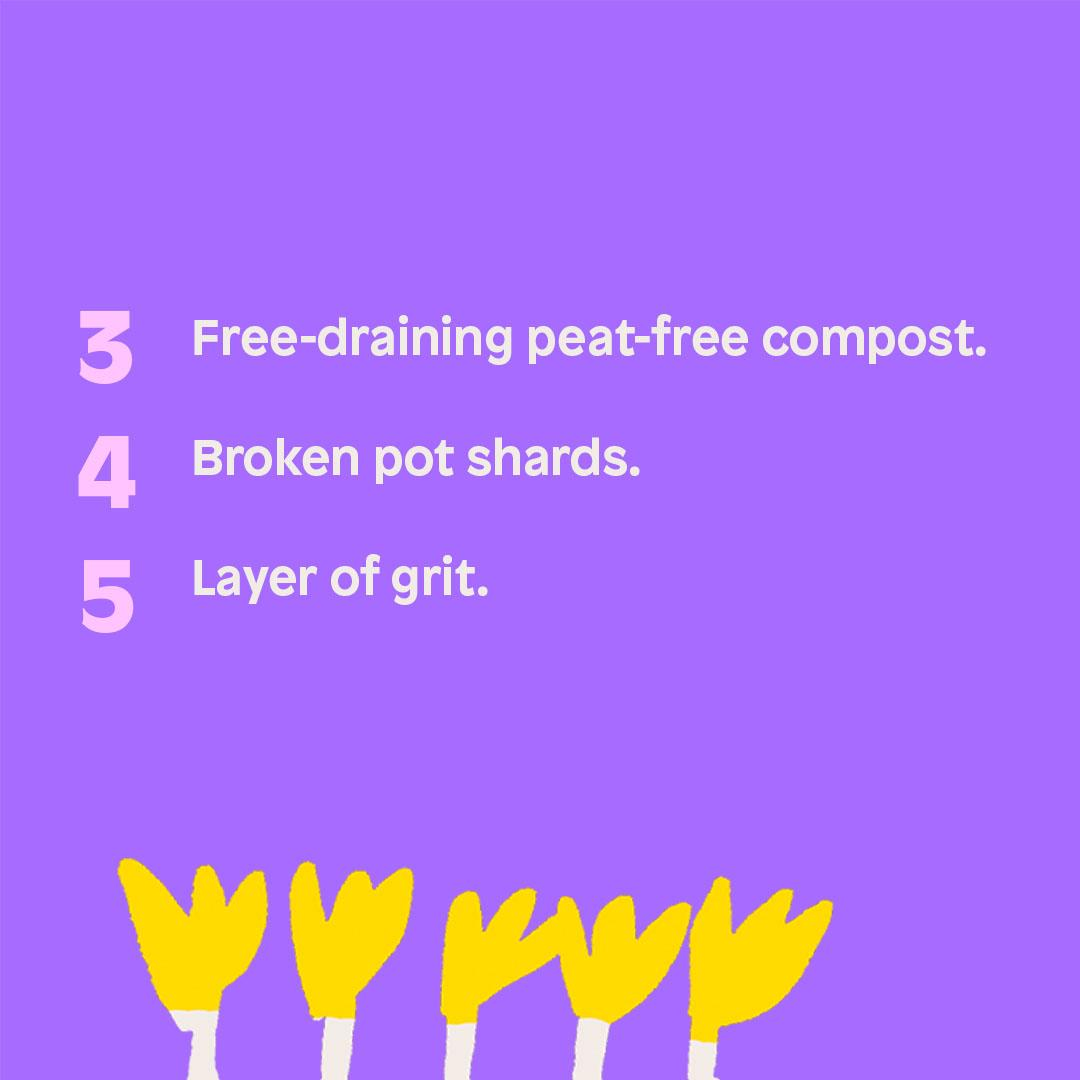 3. Free-draining peat-free compost. 4. Broken pot shards. 5. Layer of grit.