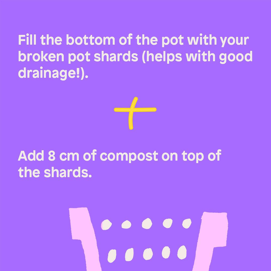 Fill the bottom of the pot with your broken pot shards (helps with good drainage!).  + Add 8 cm of compost on top of the shards.