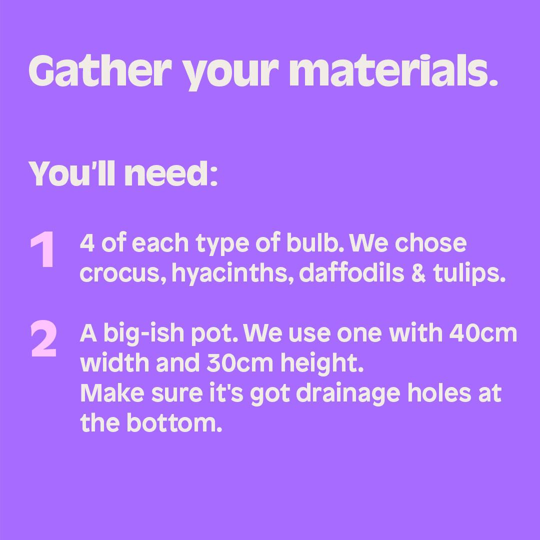 Gather your materials. You'll need: 1.4 of each type of bulb. We chose crocus, hyacinths, daffodils & tulips. 2. A big-ish pot. We use one with 40cm width and 30cm height. Make sure it's got drainage holes at the bottom.