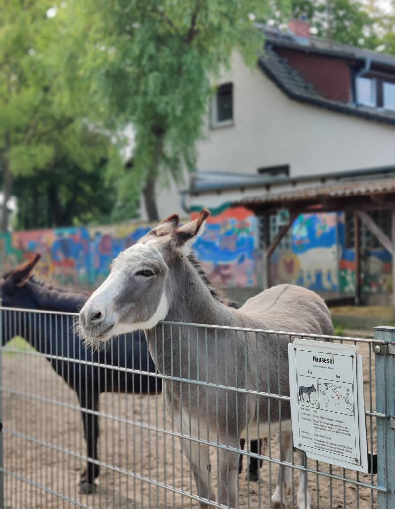 Petting zoo and park in southern Berlin