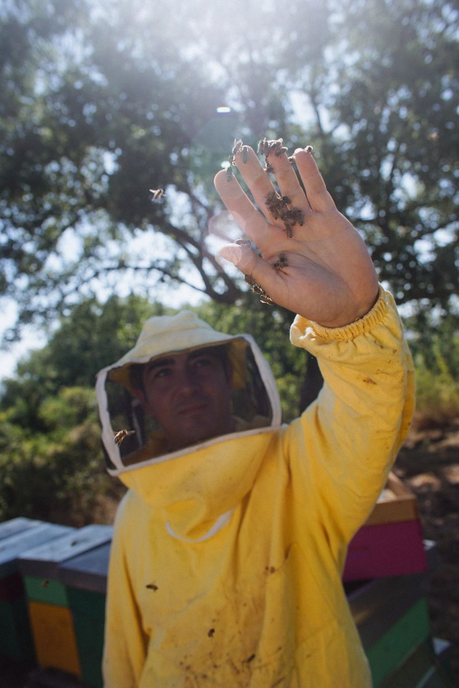 A beekeeper holds bees in his bare hands in the dappled sunlight.