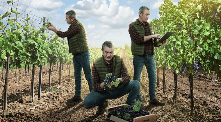 Actlet®  F y Flecha ® son los nuevos fungicidas de ASCENZA para viña