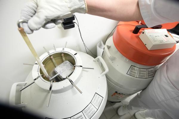 Slik lagres embryoer i tanker med flytende nitrogen.