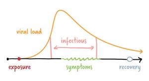 Her ser vi at virusmengden er høyest rett før man utvikler symptomer. Før og etter selve sykdommen er virusmengden lavere.
