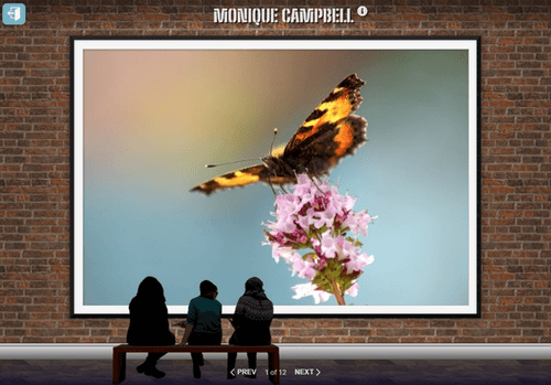 webpage showing large framed photo of a butterfly