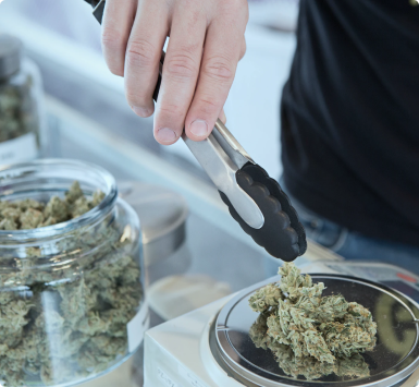 weighing cannabis with tongs