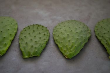 Four cactus pads (nopales / cactus paddles / cactus leaves)  lying in a row on a grey surface