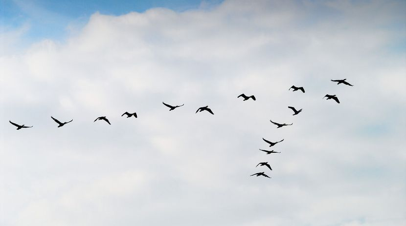 The Different Stages of Migrating to AWS: How to Go Further with the Cloud