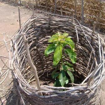 Plant 20 trees