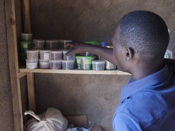 Kondwani in the seed bank